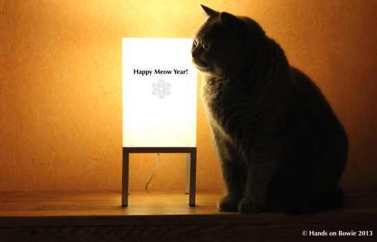 Happy Meow 2013